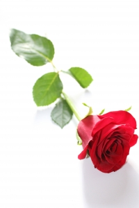 1382588_single_red_rose