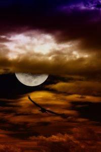 1128940_happen_in_the_night