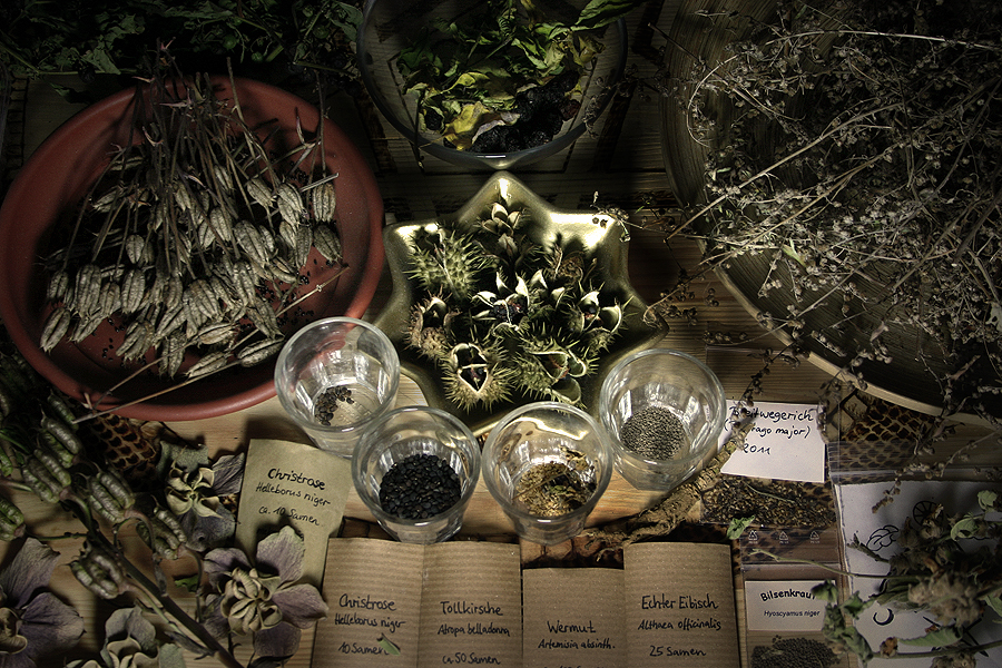 Herb Magic for Witches