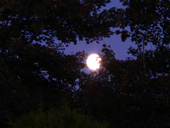 Moon Magic & the Zodiac | Witchcraft - Pagan, Wiccan, Occult