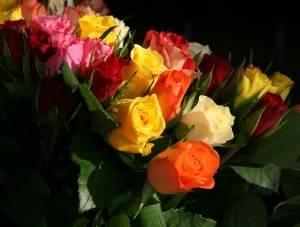 1367182_roses